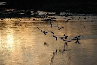Mewy nad Dunajcem