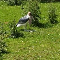 Osobliwy ptak