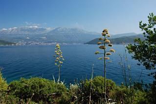 Widok na Herceg Novi