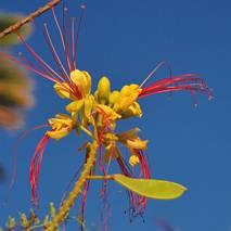 Ciekawy kwiat (?)