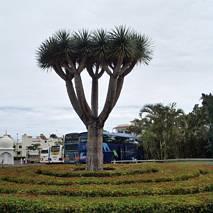 Przed wejściem do Loro Parque