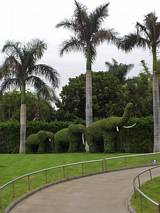 Słoniki drzewiaste