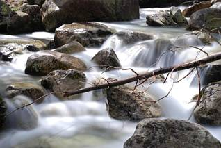 Potok staroleśny