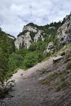 Zbocza góry Kubin (1000)
