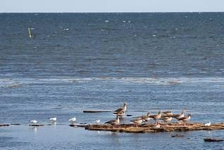 Rezerwat ptaków pod Nexo