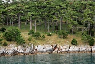 Wybrzeże Losnij