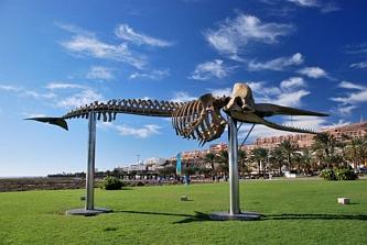 Szkielet kaszalota