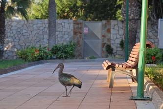 Hotelowy ibis